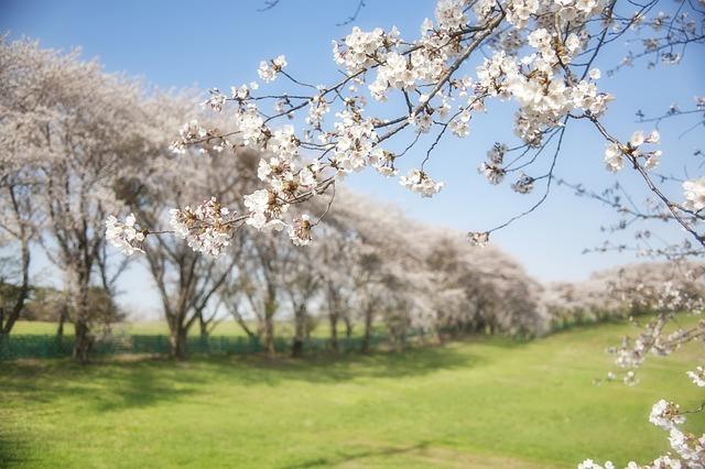 радуемся весне