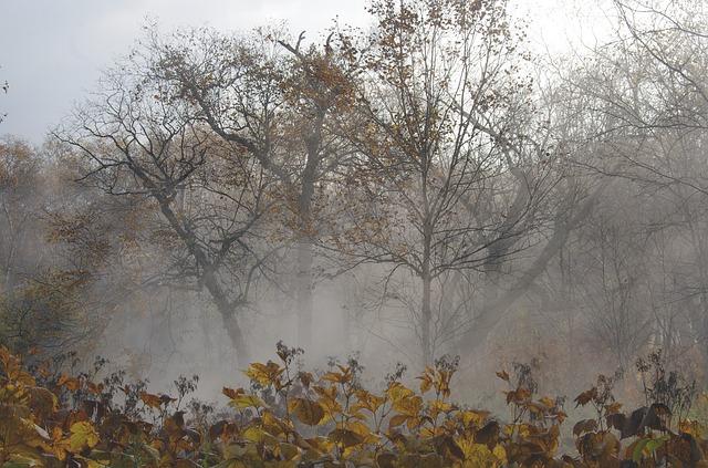 грусть, осень, депрессия
